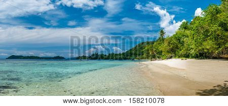 Palms on the Beach, near Biodiversity Resort, Batu Lima, Gam Island, West Papuan, Raja Ampat, Indonesia.