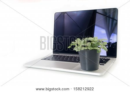 Nerve plant on flowerpot over laptop and isolated white background. concept of saving natural with technology.