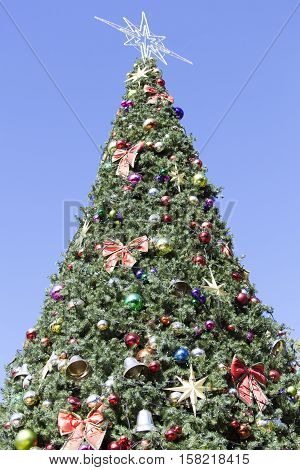 The Christmas tree in a main square of Dunedin city (New Zealand).