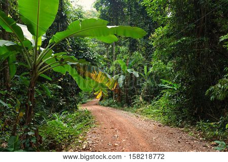 Lush tropical rainforest dirt road in the Koh Kood island, Thailand