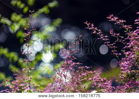 Pink tropical flowers, shallow depth of field