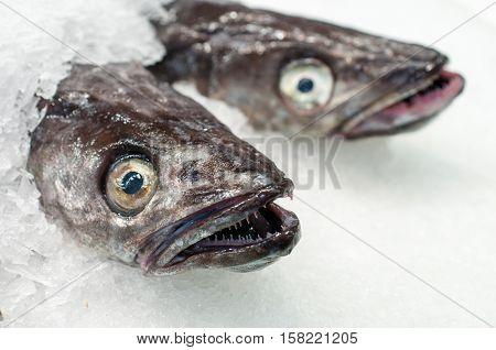 Fresh sea fish on ice market. Spain