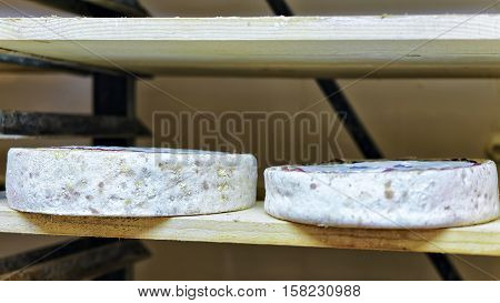 Aging Cheese At Maturing Cellar Franche Dairy