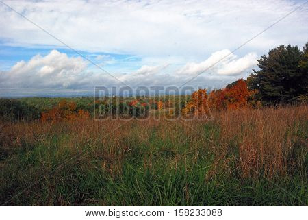 Brightly colored field with brighly colored oaks light up duroijg a  sunny Fall New England day