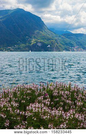 Botanical Garden At Promenade In Lugano In Ticino Of Switzerland