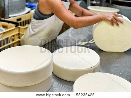 Cheese Maker Putting Young Gruyere Comte Cheese Into Forms In Dairy