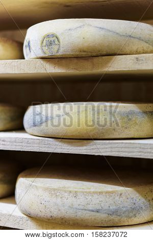 Comte Aging Cheese In Maturing Cellar Franche Creamery