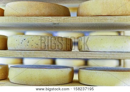 Comte Aging Cheese In Ripening Cellar Franche Creamery