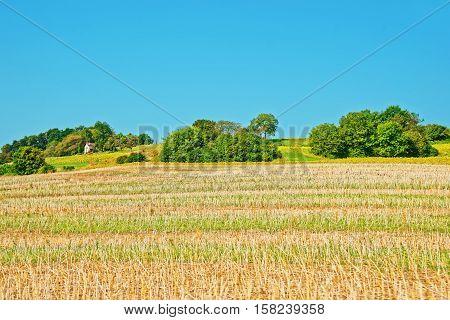 Field In Yverdon In Jura Nord Vaudois Vaud Switzerland