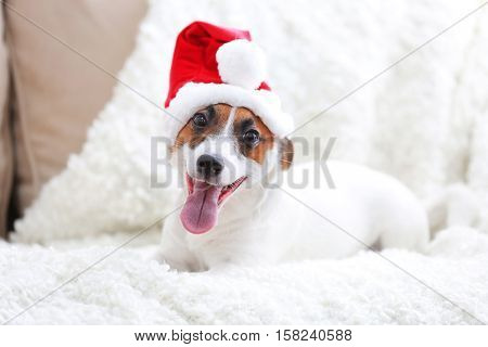 Cute Jack Russel Terrier in red hat on sofa in the room