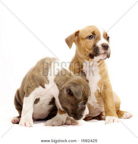 Beautiful Doggies