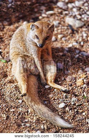 Lemur In Zoo In Citadel Of Besancon