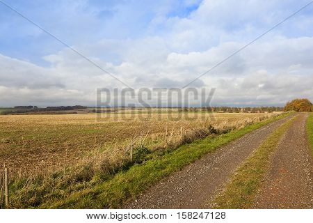 Farm Track In Autumn