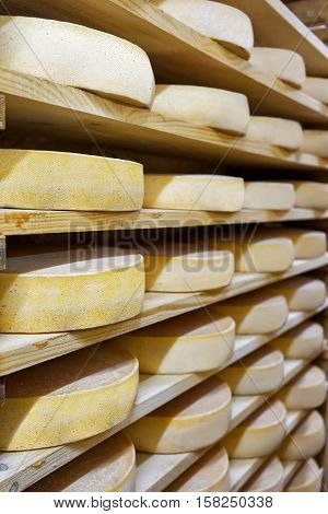 Pile Of Aging Cheese At Ripening Cellar Creamery Franche Comte