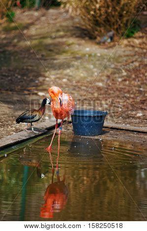 Pink Flamingo In Zoo In Citadel In Besancon