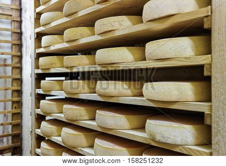 Rack Of Aging Cheese At Maturing Cellar Franche Comte Creamery