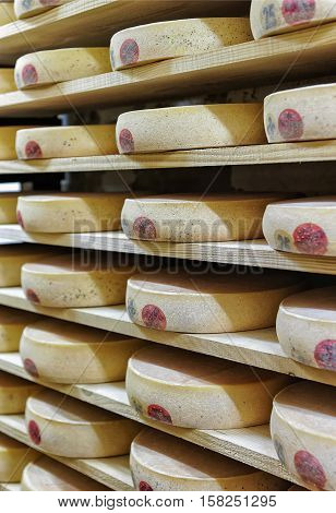 Rack Of Aging Cheese In Ripening Cellar Franche Comte Creamery