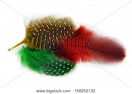 feathers covert spotted plumage isolated on white