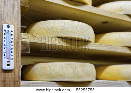 Shelf Of Aging Cheese At Ripening Cellar Franche Comte Creamery