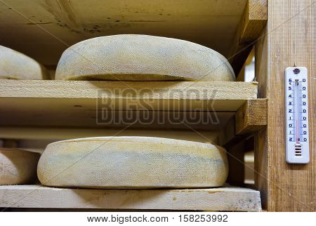 Shelves Of Aging Cheese At Ripening Cellars Franche Comte Creamery