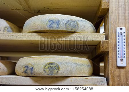 Shelves Of Aging Cheese In Ripening Cellars Franche Comte Creamery