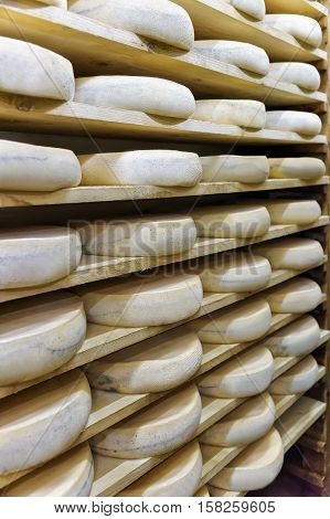 Wheels Of Aging Cheese At Maturing Cellar Franche Comte Creamery