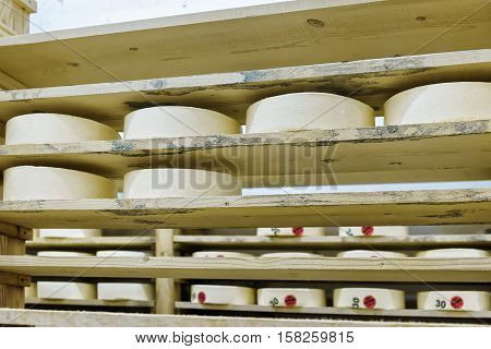 Wheels Of Young Cheese At Maturing Cellar Franche Comte Creamery