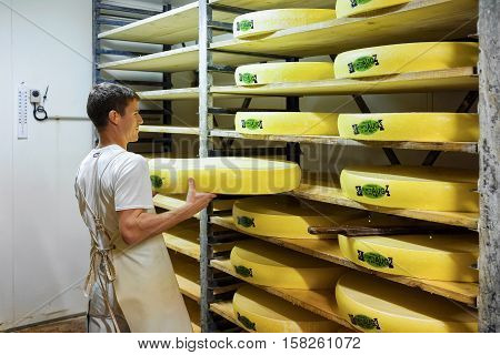 Worker Removing Aging Comte Cheese At Maturing Cellar In Creamery