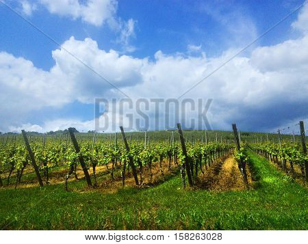 Vineyard in France. Wine production - planting grapes in good weather. Alcohol industry wine production process.