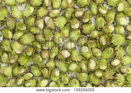 unripe green hazelnuts lies on white table