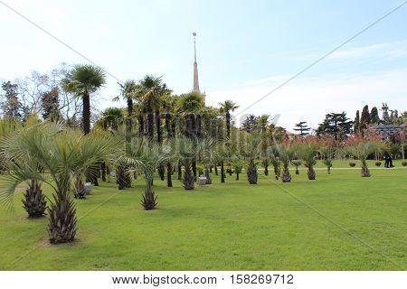 пальмы трава природа красота природы настроение жизнь