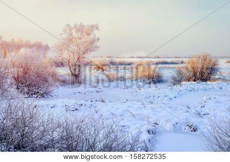 Winter field landscape with the frosty trees lit by soft sunset light - winter snowy landscape scene in warm tones
