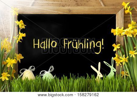 Blackboard With German Text Hallo Fruehling Means Hello Spring. Sunny Spring Flowers Nacissus Or Daffodil With Grass, Easter Egg And Bunny. Rustic Aged Wooden Background.