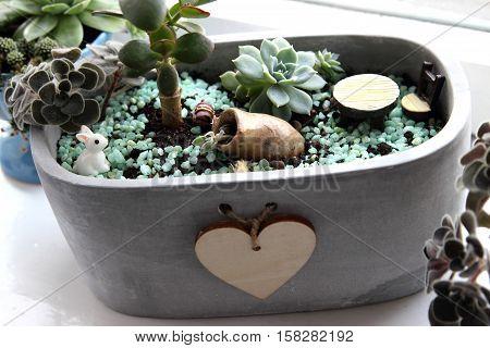 indoor plants-Succulents in pot on the windowsill