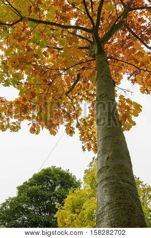 Colorful Tree In Autumn At Leases Park In Newcastle, England