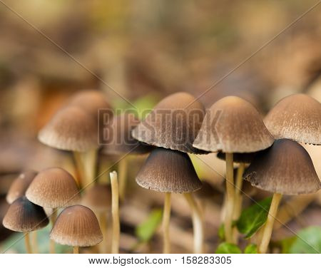 Brown Wild Mushrooms In A Park In Late Autumn