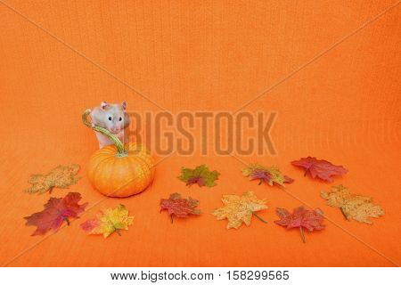 Halloween or Thanksgiving theme with a hamster standing behind a mini pumpkin. The background is an orange blanket.