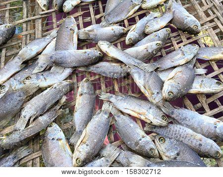 dry anabas testudineus fish on bamboo floor