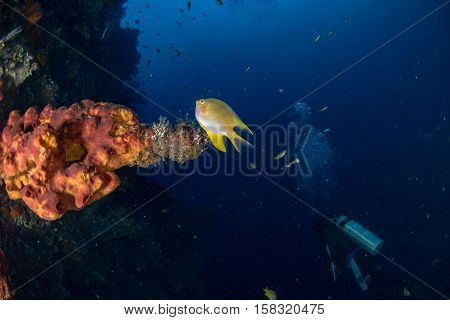 Liberty Ship Wreck In Indian Ocean In Bali Tulamben