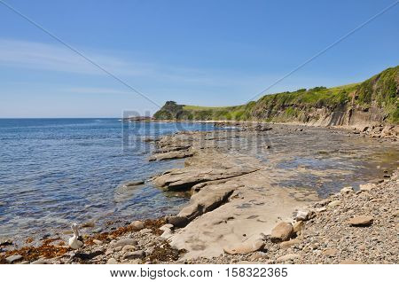 Looking across a rock-filled beach towards a grass-covered headland blue sky above and a pelican preening.