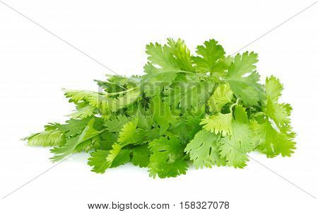 Fresh juicy organic bundle of cilantro isolated on white background