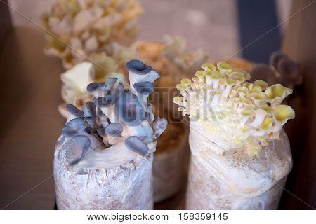 Fresh edible Mushroom types in a bag