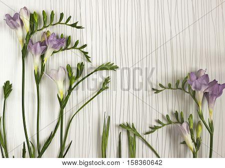 Twigs Of Fresh Freesias Flowers