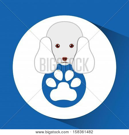 digital pet shop with poodle and paw vector illustration eps 10