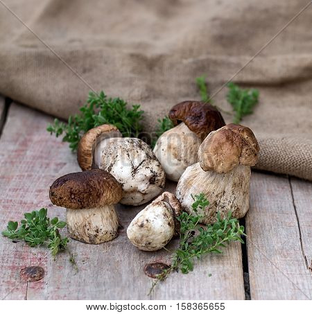 Mushrooms ceps boletus with herbs on wooden background