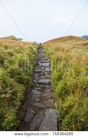 pathway along Mount Pulag or stoned trail