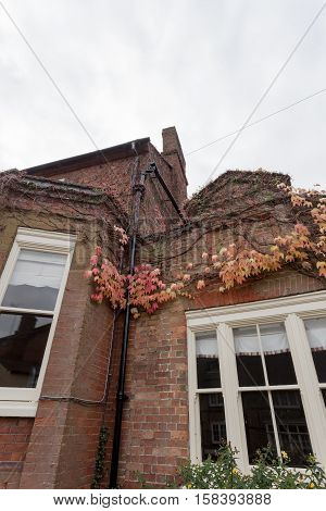 Winslow, Buckinghamshire, United Kingdom, October 25, 2016: Brick House With Red Creeaping Ivy On Th