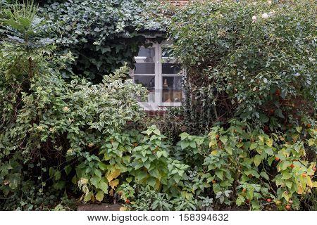Winslow, Buckinghamshire, United Kingdom, October 25, 2016: Overgrown Bushes In Front Of Cottage Win