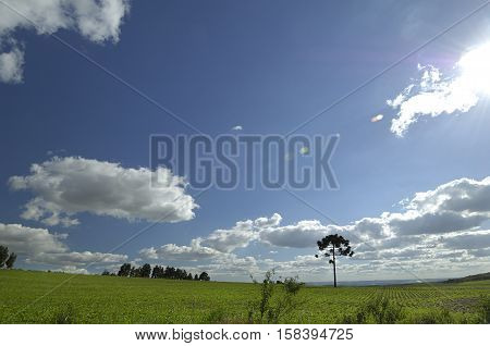Daytime field photo with planting and grassland with blue sky.