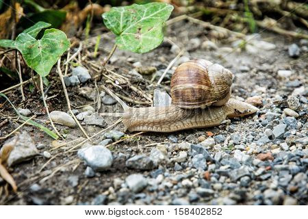 Detail photo of beautiful snail or slug in outdoors. Beauty in nature. Animal scene.